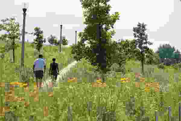 Prairie planting at Henry Palmisano Park in Chicago by Site Design Group and D.I.R.T studio.