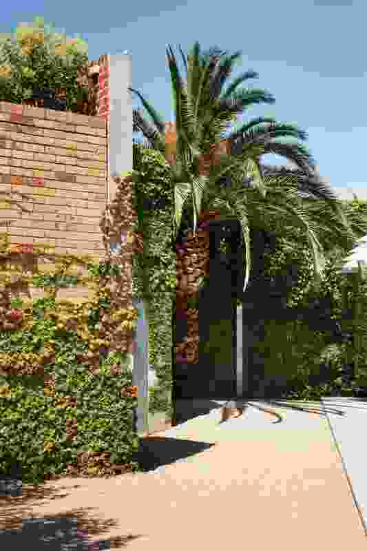 A giant Canary Island Date Palm (Phoenix canariensis) casts a playful shadow over the barbecue area.