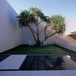 The upper level garden court with specimen pandanus.