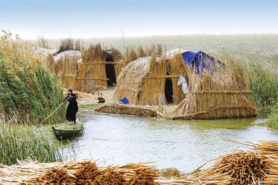 The distinctive forms of the mudhif houses of the Ma'dan people of southern Iraq, constructed from qasab reed.