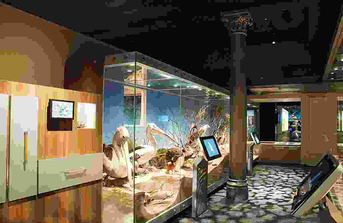 South Australian Museum Biodiversity Gallery by Grieve Gillett.
