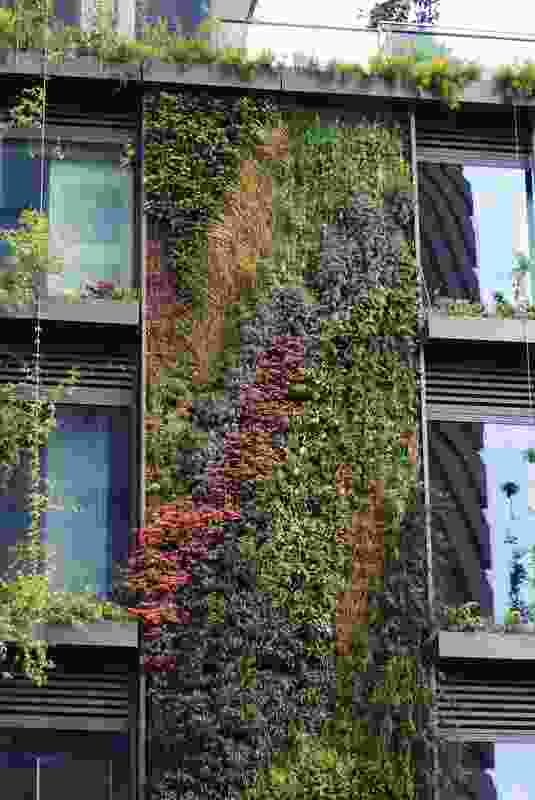 A green wall designed by Patrick Blanc at One Central Park, Sydney. The wall's diverse planting scheme demonstrates the benefit of using multiple plant forms, colours and textures for visual effect.